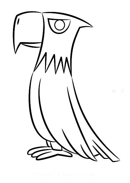 简单小动物简笔画图片大全 色彩老鹰的画法图解